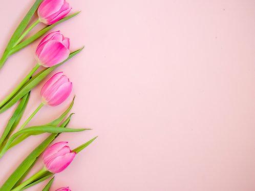 tulpen stock