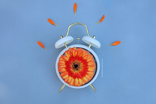 blossom time orange