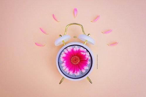blossom time warm