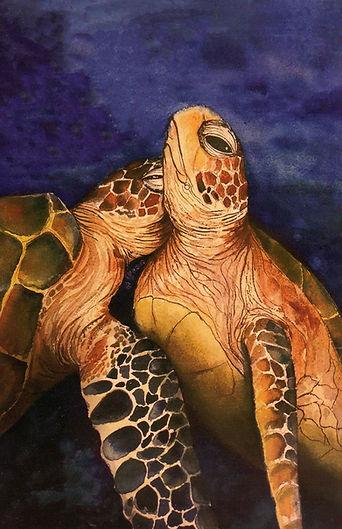 Loving Turtles E 2021-5-23.jpg
