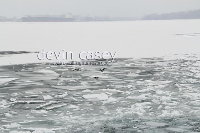 Arctic1772.jpg