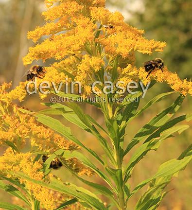 Bees15463.jpg