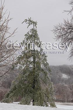 frozentree1-1413.jpg