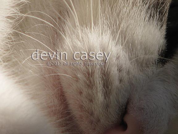 cat1w6164.jpg