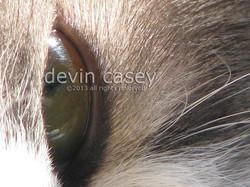 cat1w6161.jpg