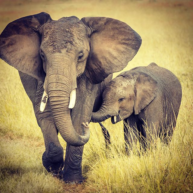 South African Safari with kiddos