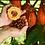 Thumbnail: Cocoa Farm 500 Saplings
