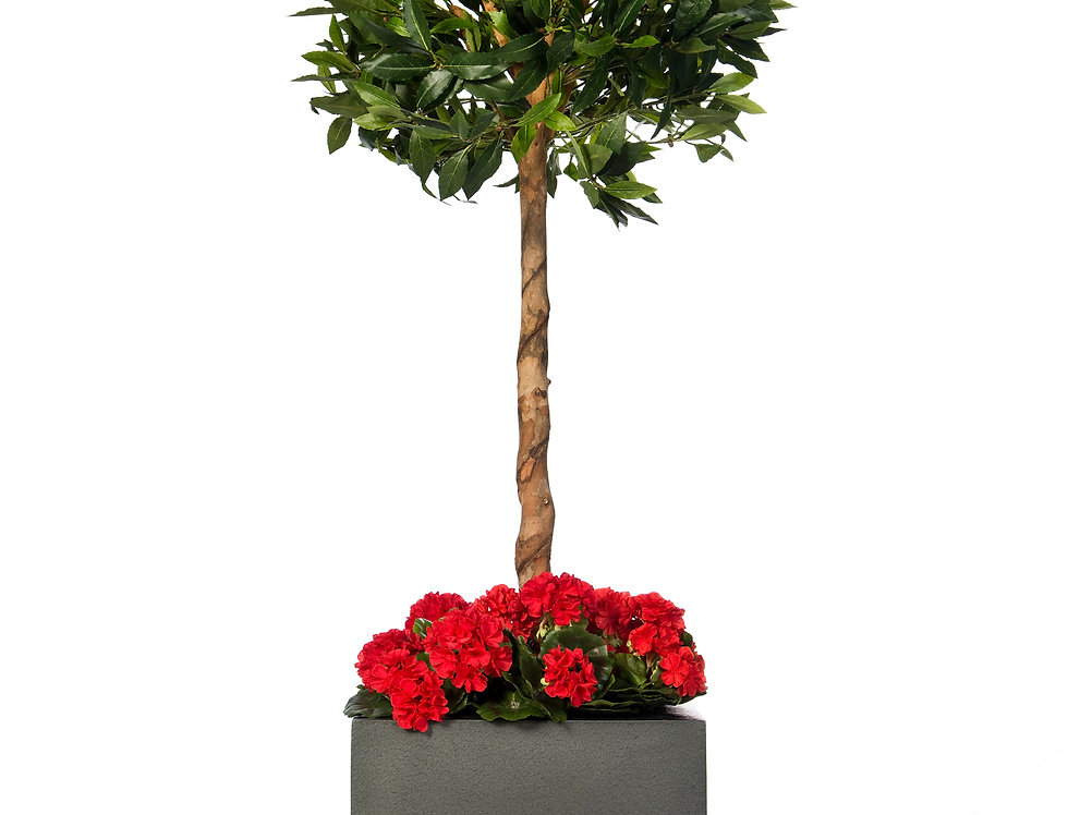 Artificial Bay Tree with Geraniums and Geo Cube Planter