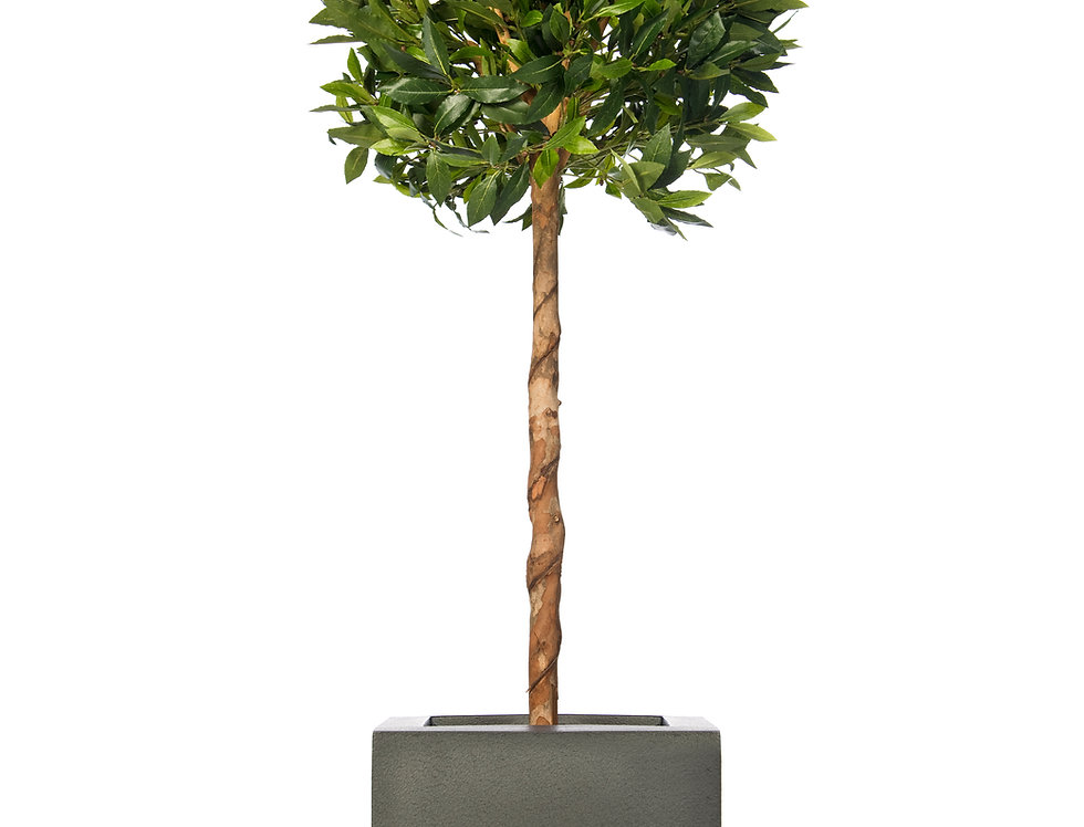 Artificial Bay Tree with Geo Cube Planter