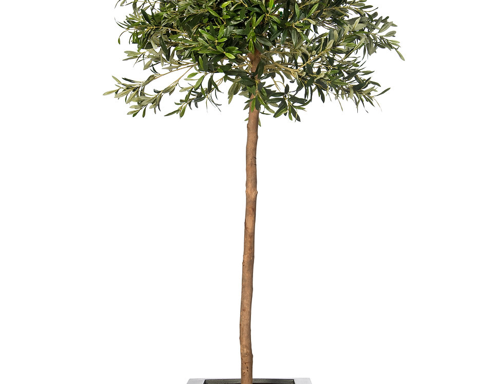 Artificial Olive Tree with Geo Cube Planter