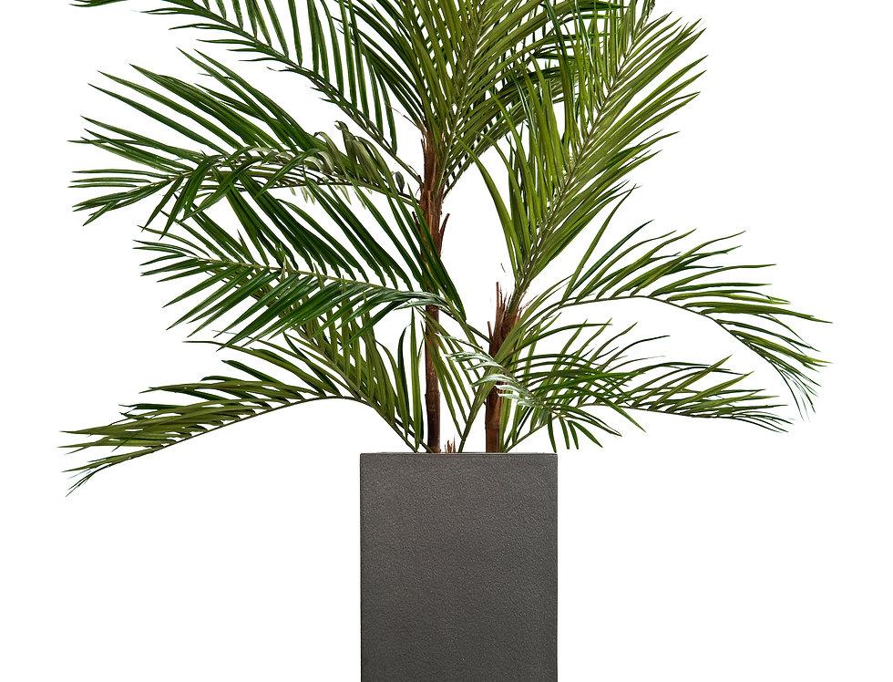 Areca Palm with Geo Square Planter