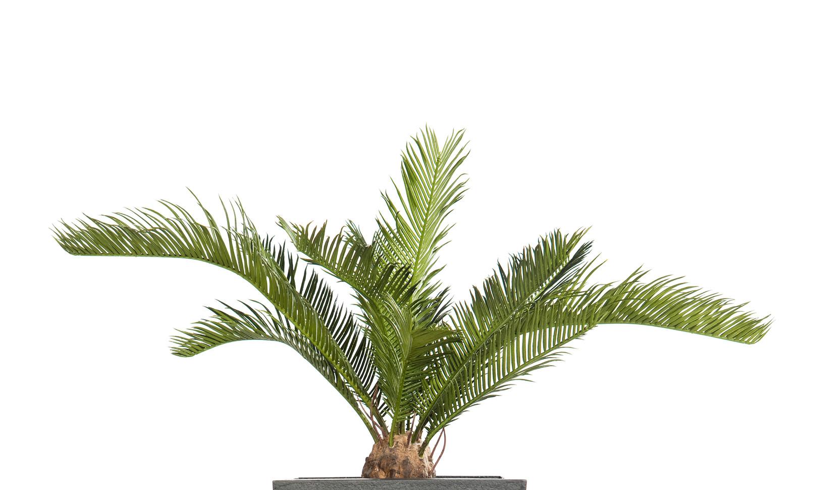 Artificial Cycas Palm.jpg
