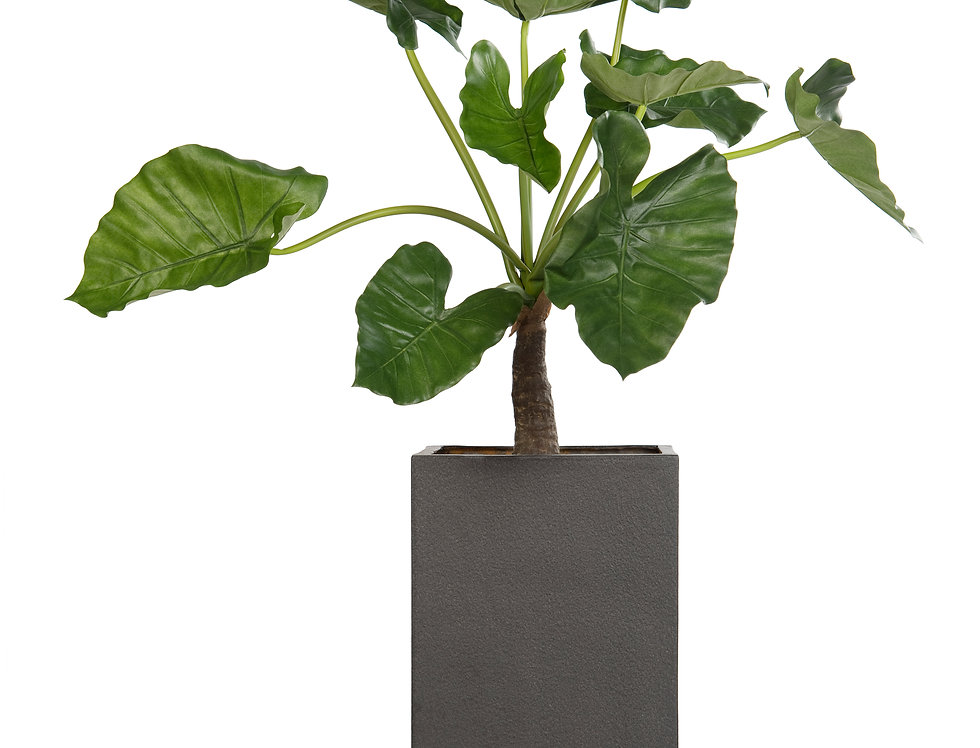 Artificial Alocasia with Geo Square Planter