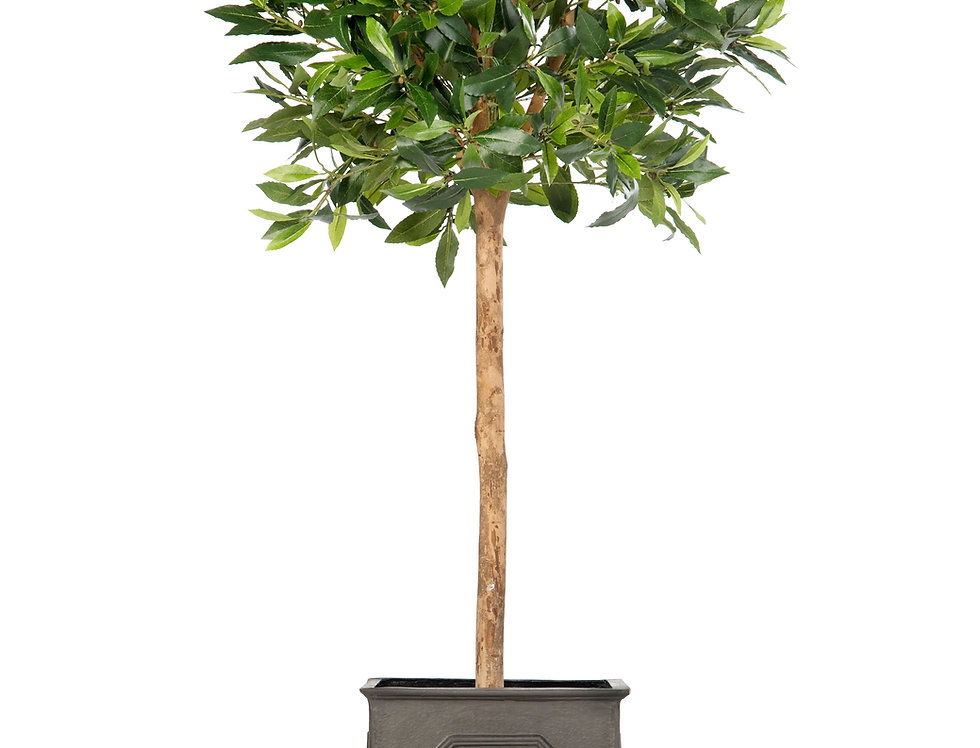 Artificial Bay Tree with Stuart Planter