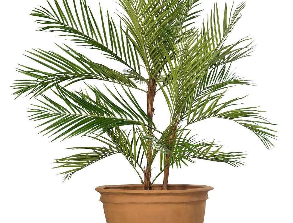Artificial Areca Palm with Plain Planter