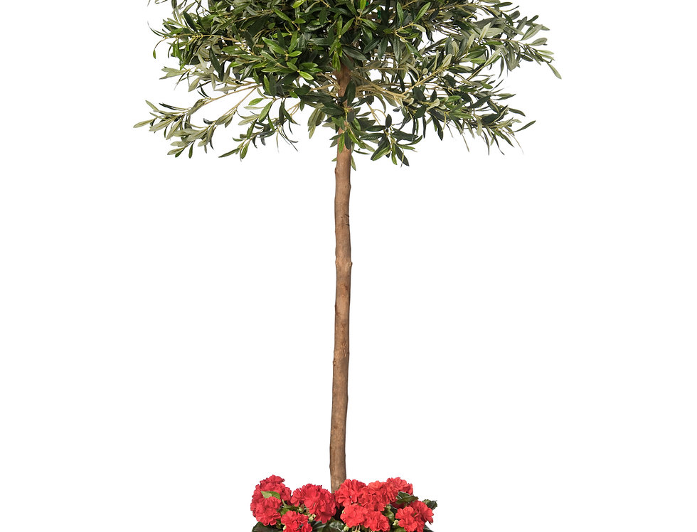 Artificial Olive Tree with Geraniums and Geo Cube Planter