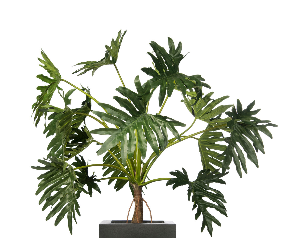 Artificial Philodendron.jpg