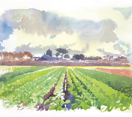 watercolour-painting-sark-Mill-field.jpg