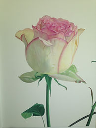 rose on wall.jpg