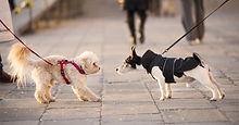 dogs-meeting-fb-3.jpg