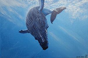 The Whale sea ocean Kamchatka
