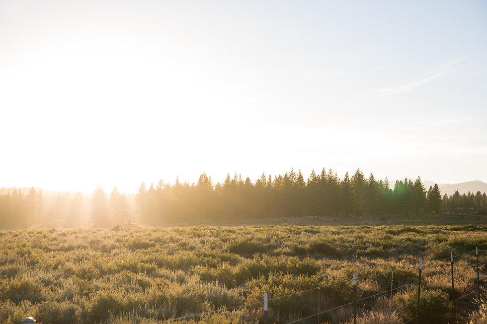 Martis Valley landscapes-45.jpg