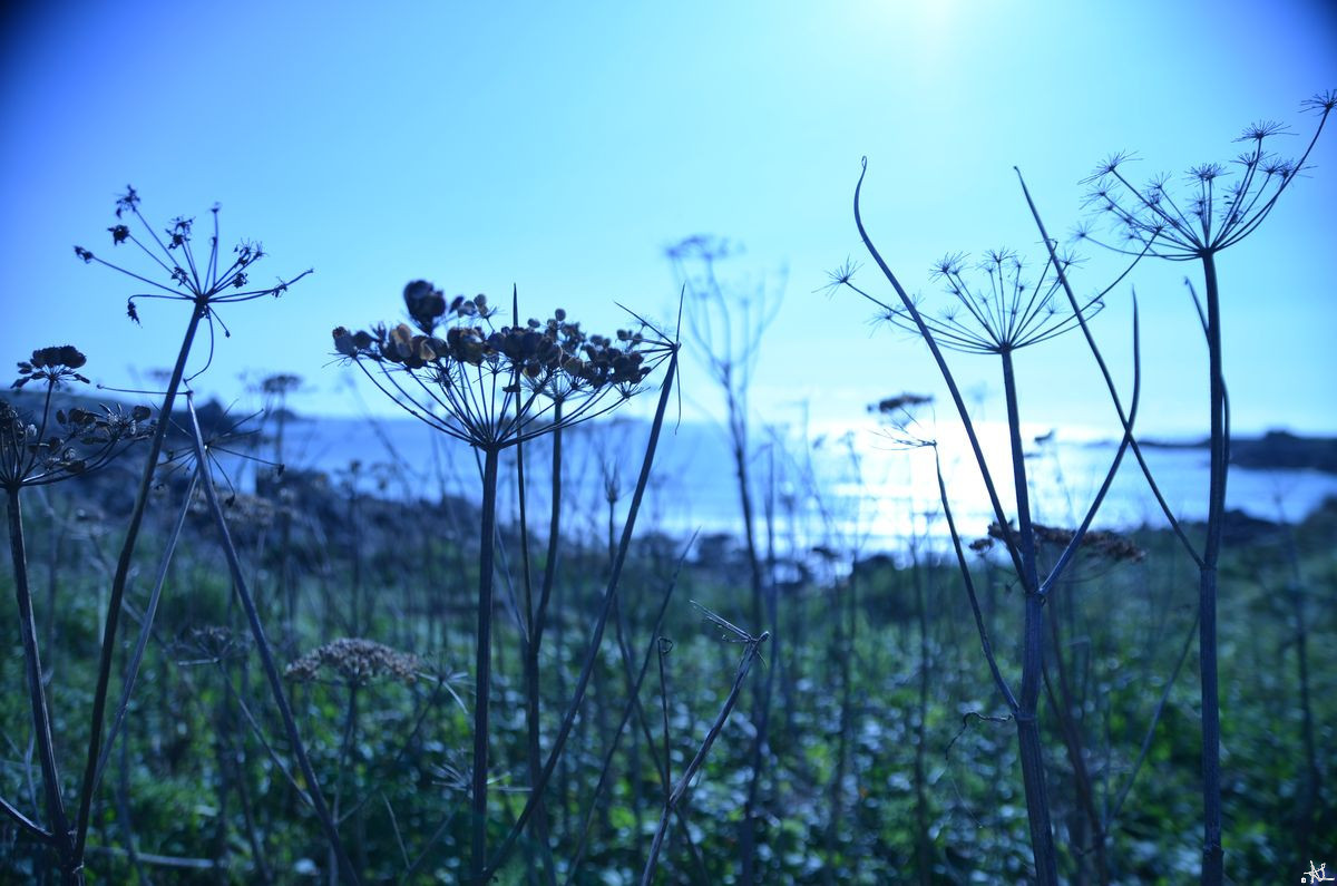bord-de-mer-bleu-1200.jpg