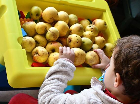 Aug-pommes-recadre-ok.jpg