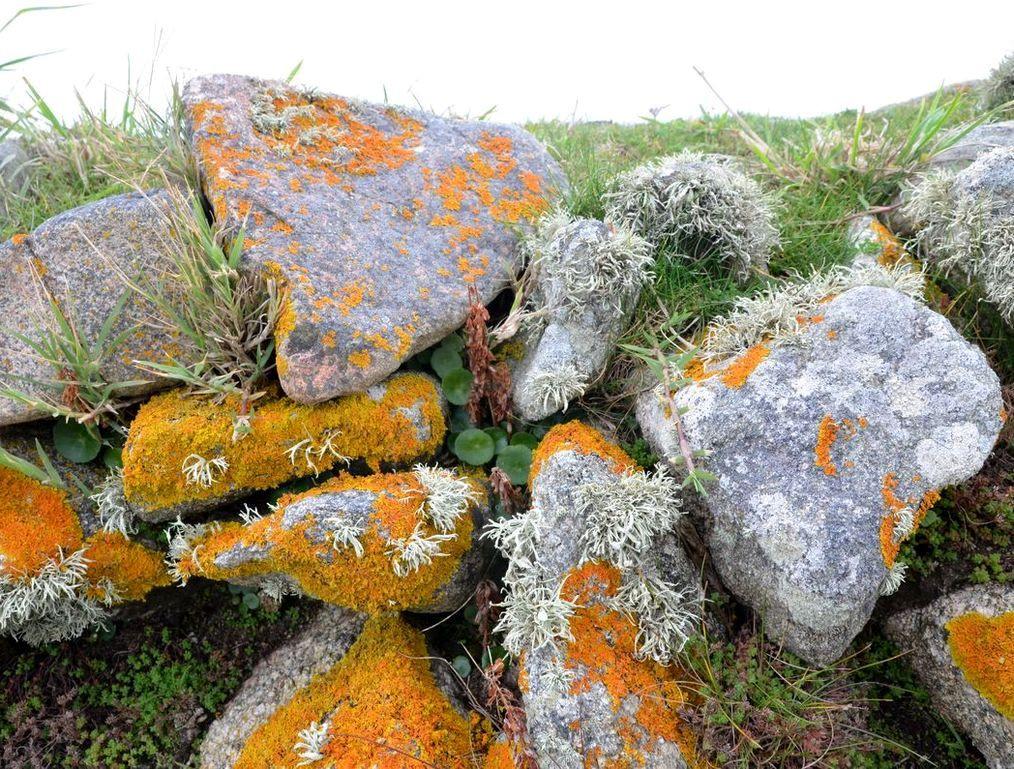 4-1-fleurs-de-pierres-769-bis.jpg