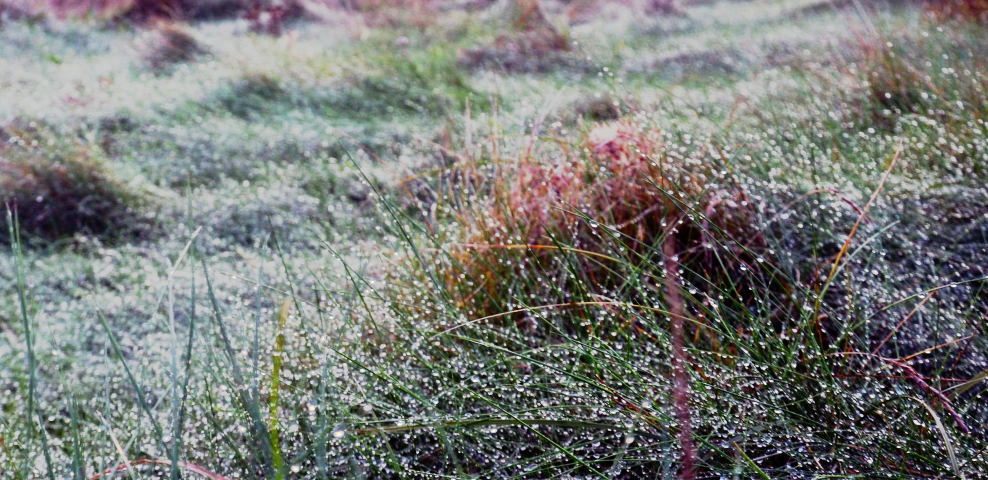 herbes-rosée0.jpg