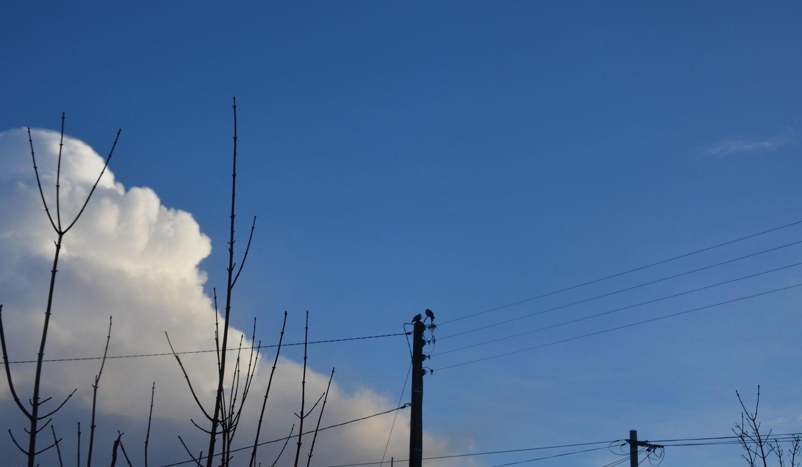 deux-oiseaux-1600.jpg