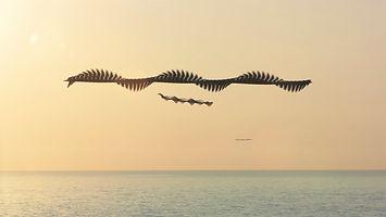 xavi bou foto-projecte-Ornitography_#34.