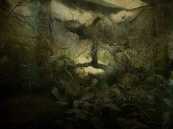 Les_souvenirs_d´une_jungle.jpg