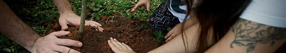 maos-na-terra-plantando-uma-arvore.jpg