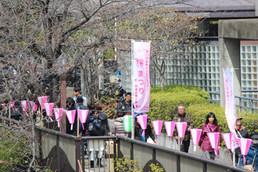 20170402_目黒イーストエリア桜まつり (932).JPG