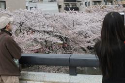 目黒イーストエリア桜まつり2014 (95).jpg