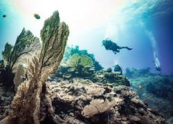 Fiji Trip Planner   GeoLuxe Travel   scuba diving