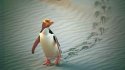 New Zealand Trip Planner   GeoLuxe   penguin on beach