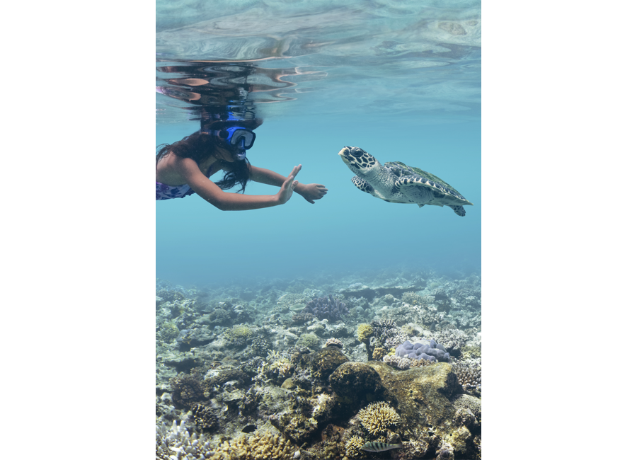 Fiji Trip Planner | GeoLuxe Travel | snorkeling with a sea turtle