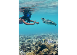 Fiji Trip Planner   GeoLuxe Travel   snorkeling with a sea turtle