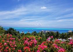 Tahiti Trip Planner | GeoLuxe | beachfront pink flowers