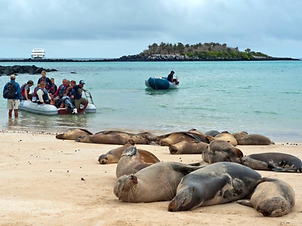Cruise Trip Planner | GeoLuxe Travel | seals on a beach