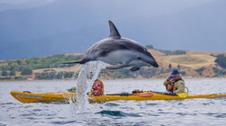 New Zealand Trip Planner   GeoLuxe   dolphin jumping over boaters