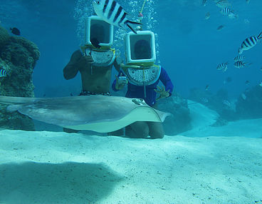 GeoLuxe Travel Testimonials | Man and woman scuba diving with stingray | Luxury Travel Consultant