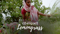 Co-Impact Sourcing 4