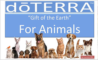 Essential Oils for Pets.JPG