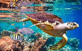 Turtle-768x480.jpg