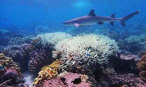 Coral-reef-2.jpg