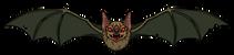 Bat1-01.png