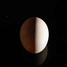 Dark side of the egg